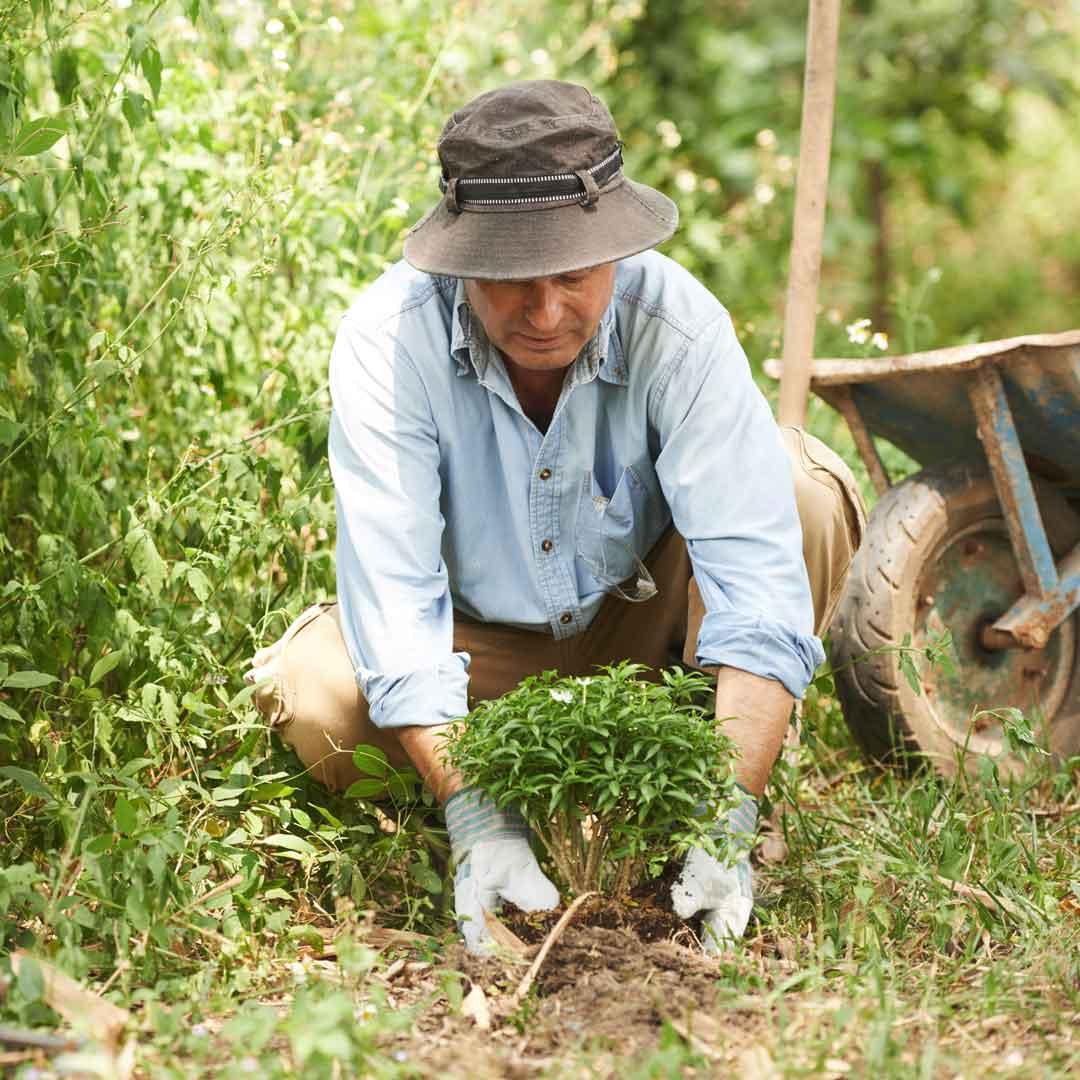 An Aussie gardening man